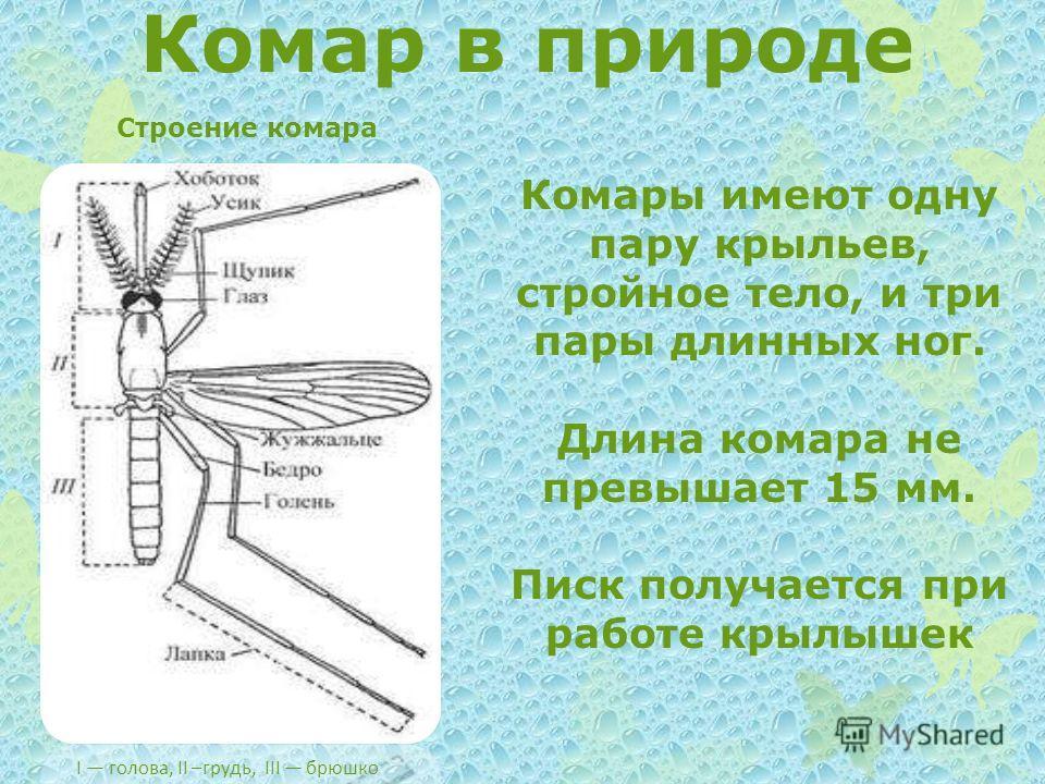 Комар в природе I голова, II –грудь, III брюшко Строение комара Комары имеют одну пару крыльев, стройное тело, и три пары длинных ног. Длина комара не превышает 15 мм. Писк получается при работе крылышек