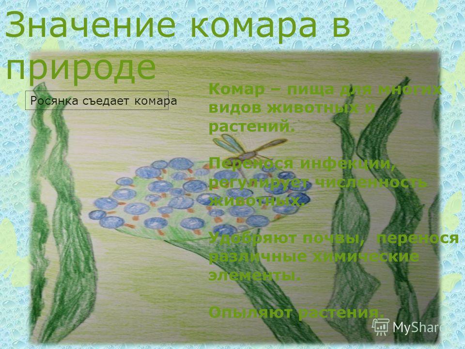 Значение комара в природе Комар – пища для многих видов животных и растений. Перенося инфекции, регулирует численность животных. Удобряют почвы, перенося различные химические элементы. Опыляют растения. Росянка съедает комара