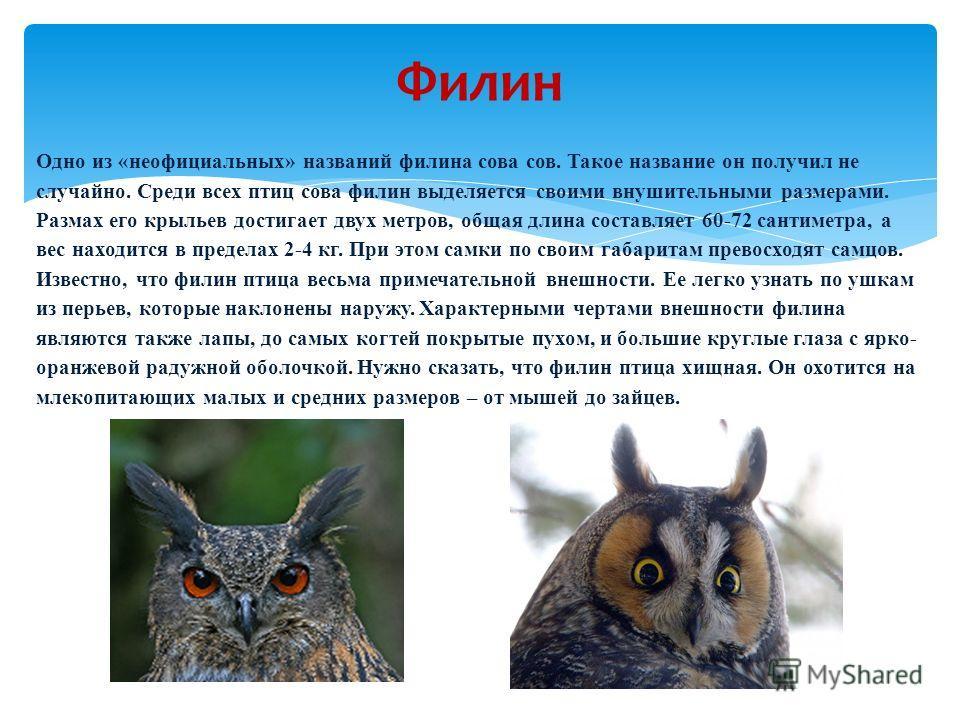 Одно из «неофициальных» названий филина сова сов. Такое название он получил не случайно. Среди всех птиц сова филин выделяется своими внушительными размерами. Размах его крыльев достигает двух метров, общая длина составляет 60-72 сантиметра, а вес на