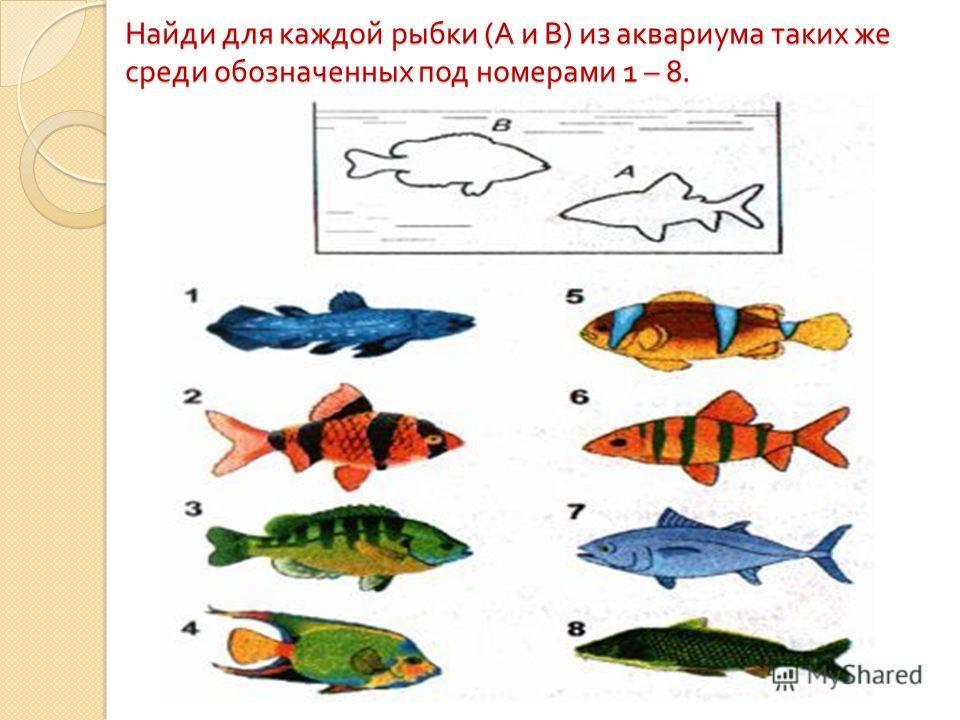 Найди для каждой рыбки ( А и В ) из аквариума таких же среди обозначенных под номерами 1 – 8.