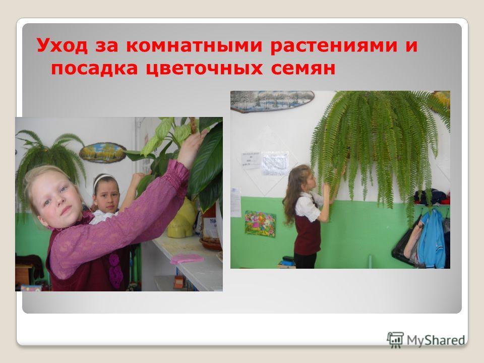 Уход за комнатными растениями и посадка цветочных семян