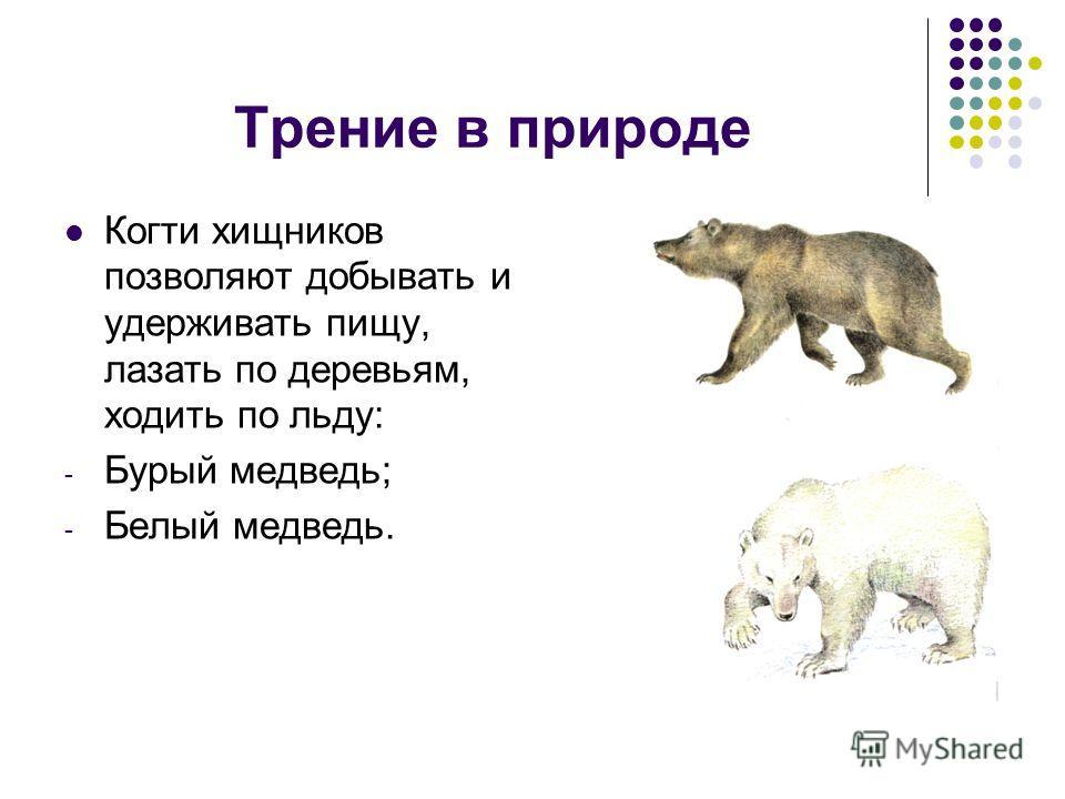Трение в природе Когти хищников позволяют добывать и удерживать пищу, лазать по деревьям, ходить по льду: - Бурый медведь; - Белый медведь.