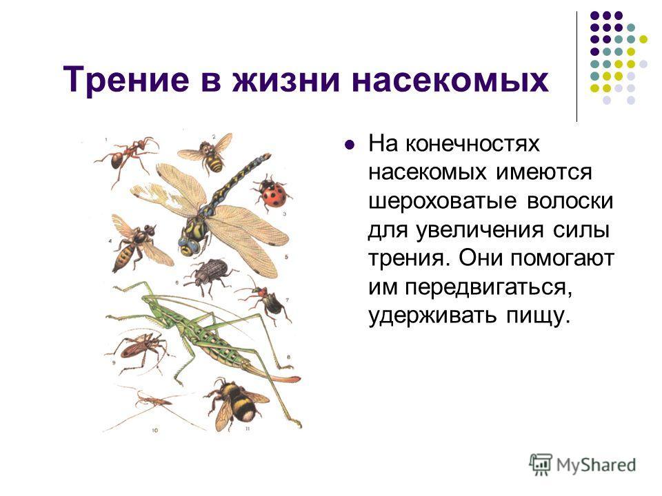 Трение в жизни насекомых На конечностях насекомых имеются шероховатые волоски для увеличения силы трения. Они помогают им передвигаться, удерживать пищу.