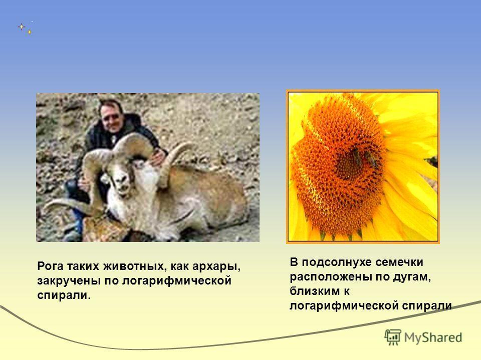 Рога таких животных, как архары, закручены по логарифмической спирали. В подсолнухе семечки расположены по дугам, близким к логарифмической спирали