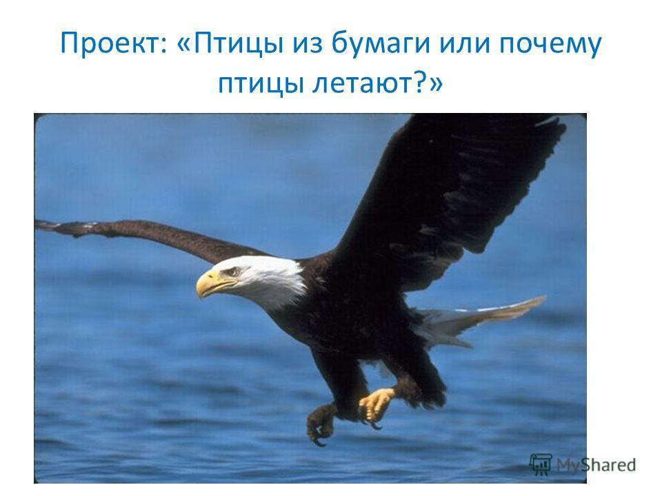 Проект: «Птицы из бумаги или почему птицы летают?»