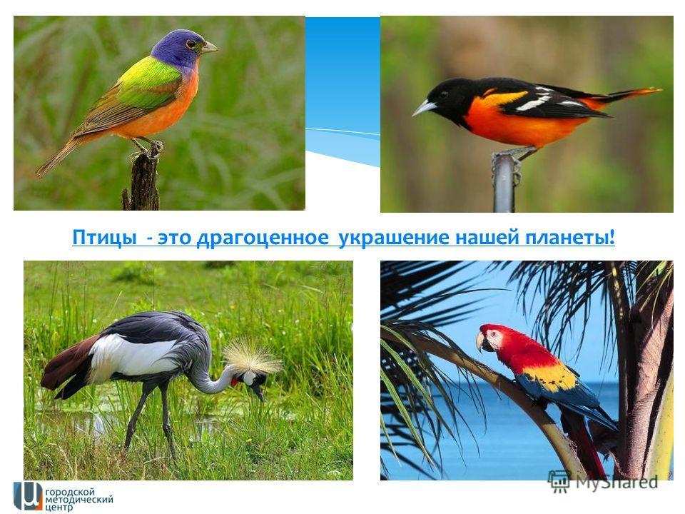 Птицы - это драгоценное украшение нашей планеты!