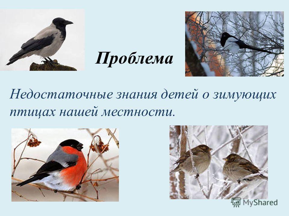 Недостаточные знания детей о зимующих птицах нашей местности. Проблема
