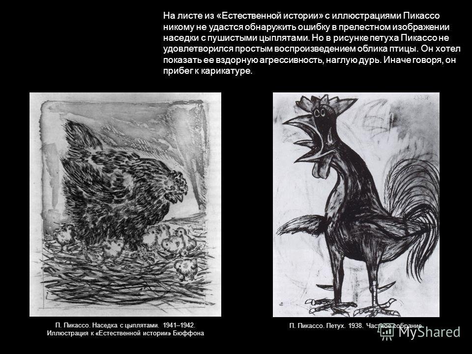 На листе из «Естественной истории» с иллюстрациями Пикассо никому не удастся обнаружить ошибку в прелестном изображении наседки с пушистыми цыплятами. Но в рисунке петуха Пикассо не удовлетворился простым воспроизведением облика птицы. Он хотел показ