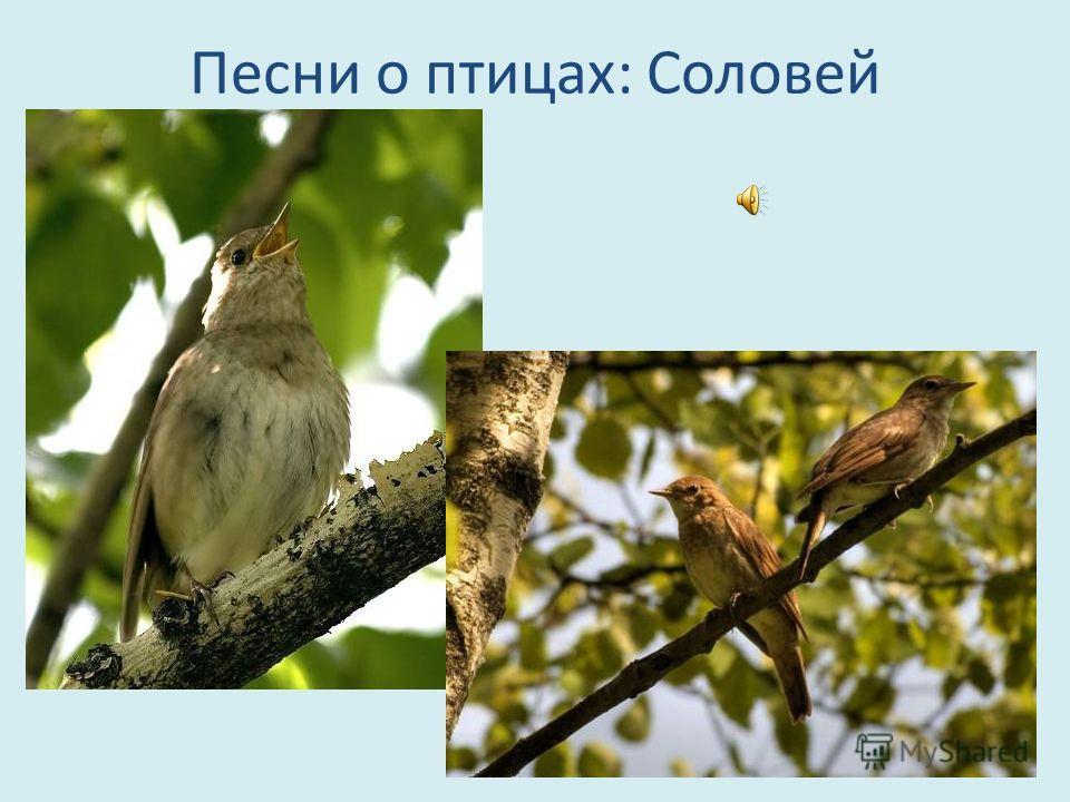 Песни о птицах: Соловей