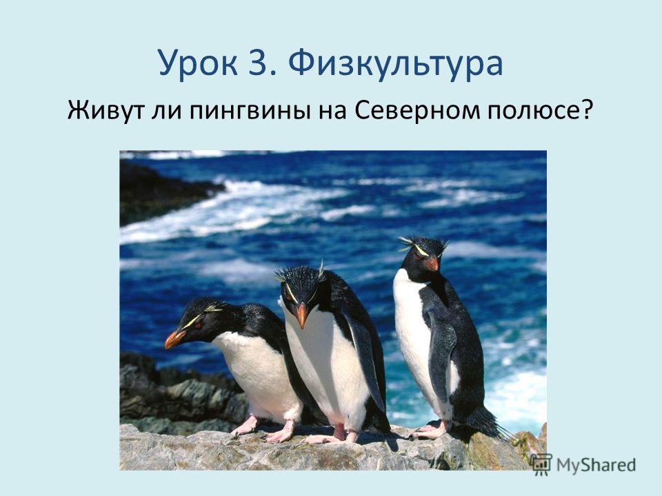 Урок 3. Физкультура Живут ли пингвины на Северном полюсе?