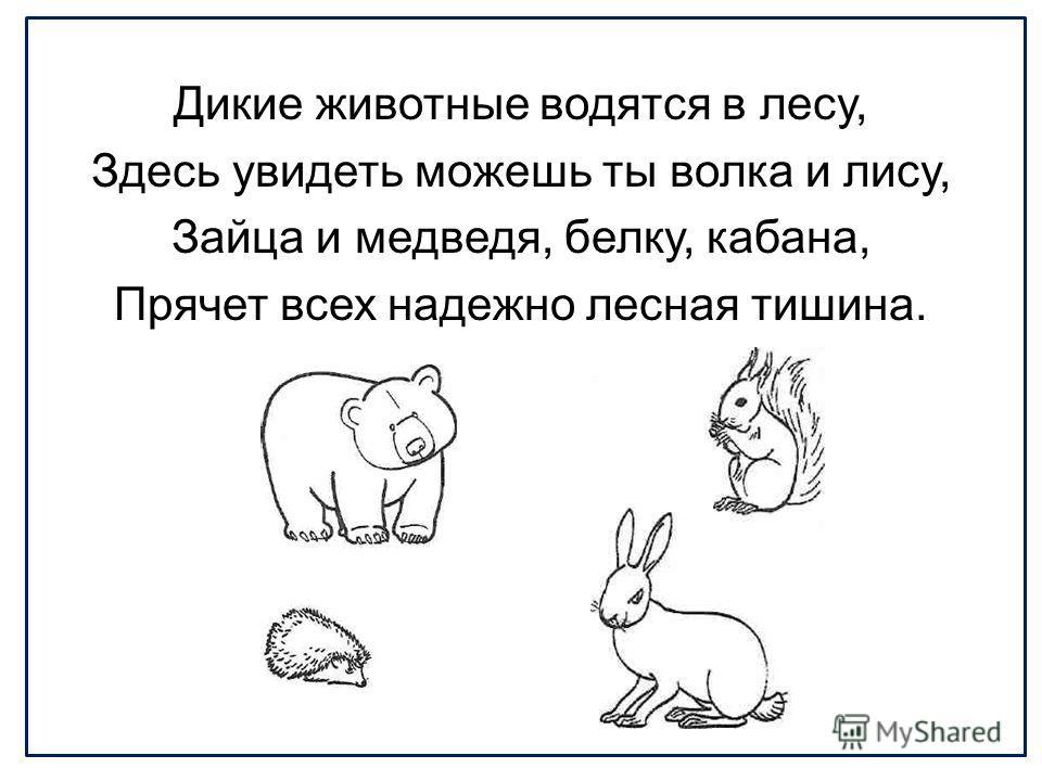 Дикие животные водятся в лесу, Здесь увидеть можешь ты волка и лису, Зайца и медведя, белку, кабана, Прячет всех надежно лесная тишина.