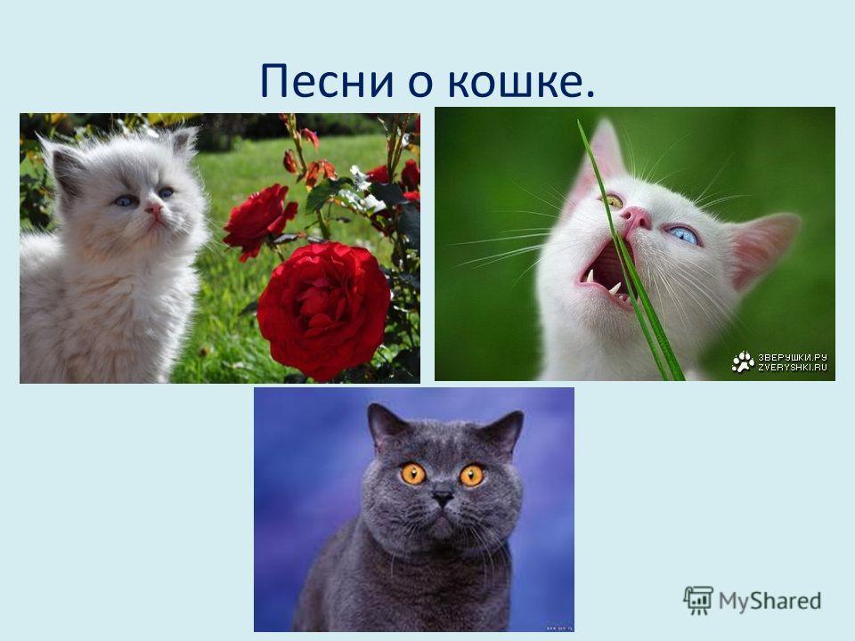 Песни о кошке.