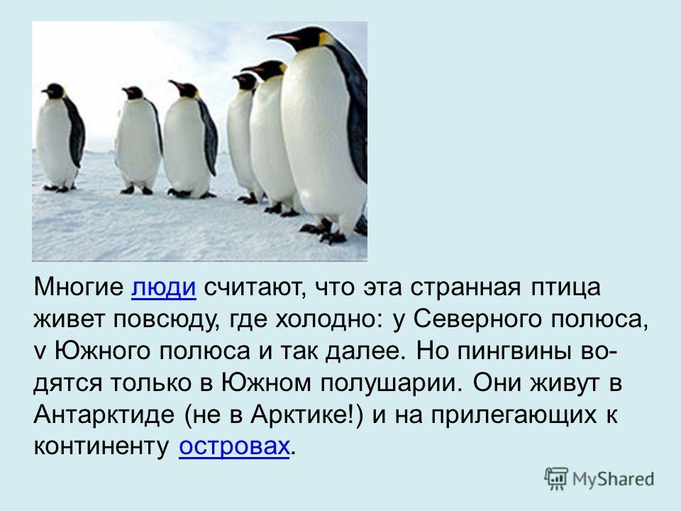 Многие люди считают, что эта странная птица живет повсюду, где холодно: у Северного полюса, v Южного полюса и так далее. Но пингвины во дятся только в Южном полушарии. Они живут в Антарктиде (не в Арктике!) и на прилегающих к континенту островах.люд