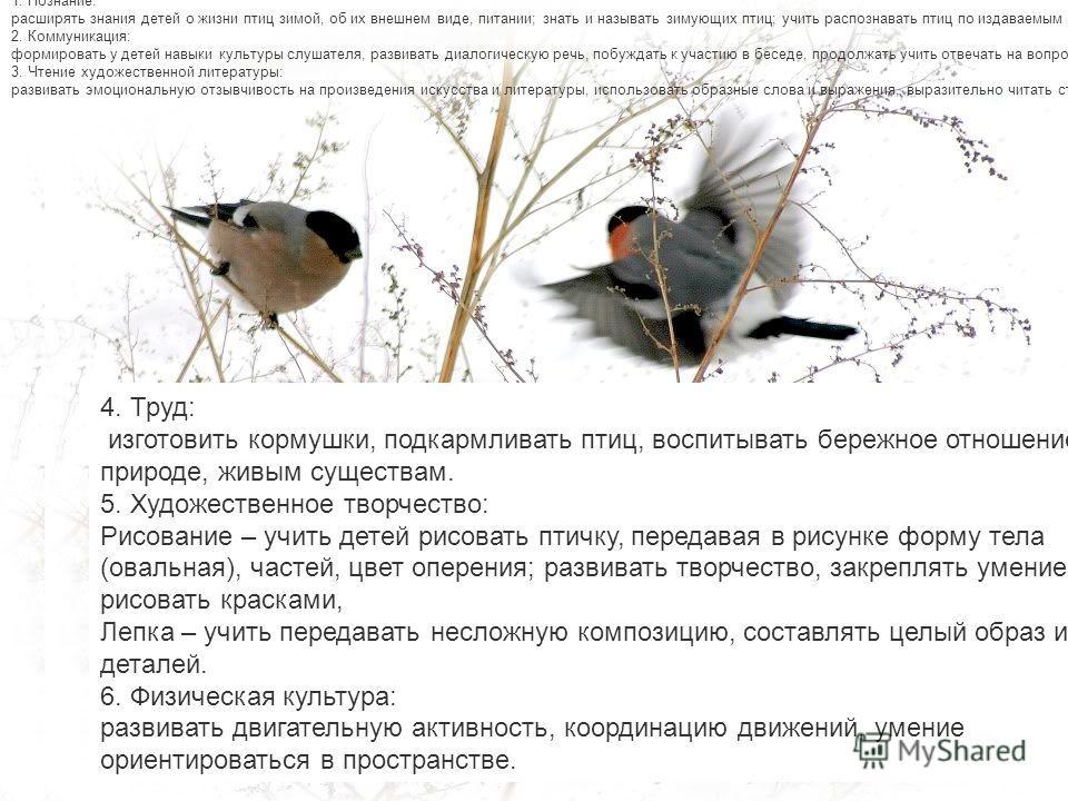 Зад ачи образовательных областей: 1. Познание: расширять знания детей о жизни птиц зимой. 2. Коммуникация: развивать диалогическую речь, побуждать к участию в беседе, продолжать учить отвечать на вопросы, составлять описательный рассказ с опорой на с
