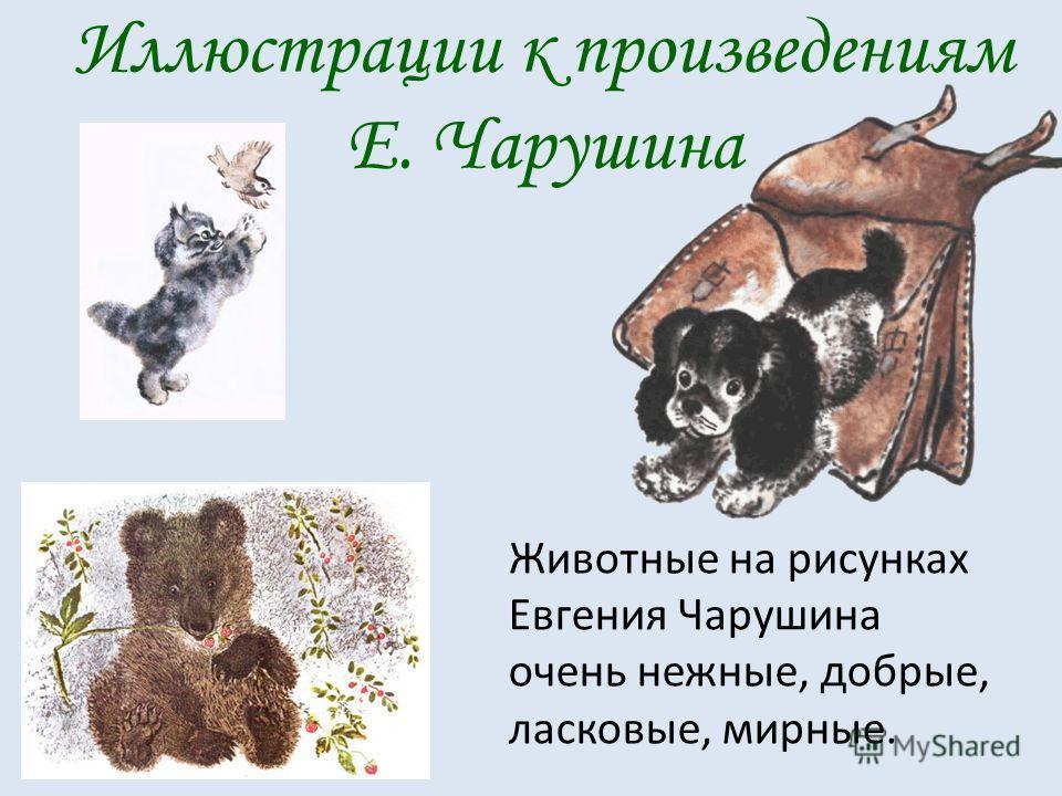 Иллюстрации к произведениям Е. Чарушина Животные на рисунках Евгения Чарушина очень нежные, добрые, ласковые, мирные.