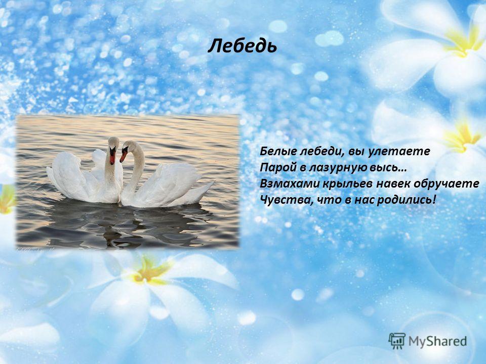 Лебедь Белые лебеди, вы улетаете Парой в лазурную высь… Взмахами крыльев навек обручаете Чувства, что в нас родились!