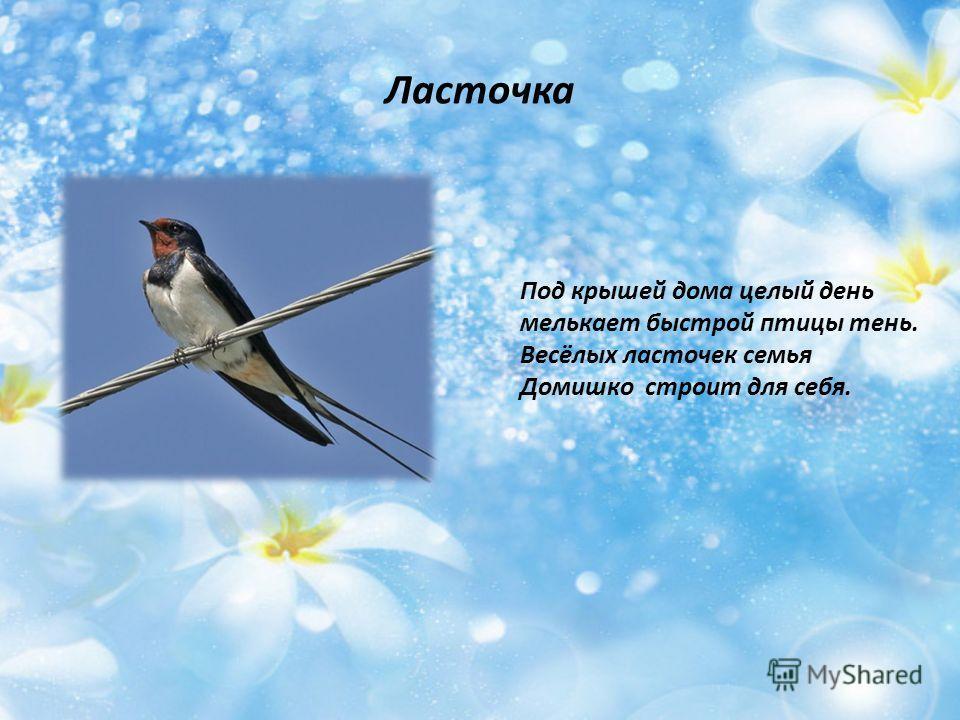 Ласточка Под крышей дома целый день мелькает быстрой птицы тень. Весёлых ласточек семья Домишко строит для себя.