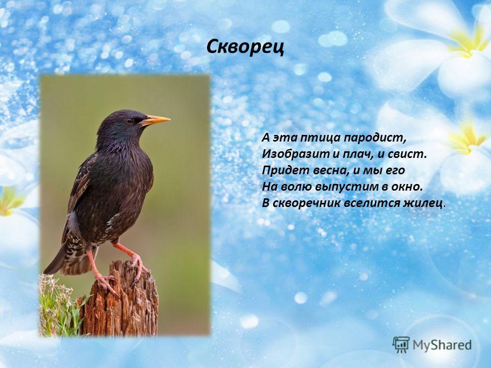 Скворец А эта птица пародист, Изобразит и плач, и свист. Придет весна, и мы его На волю выпустим в окно. В скворечник вселится жилец.