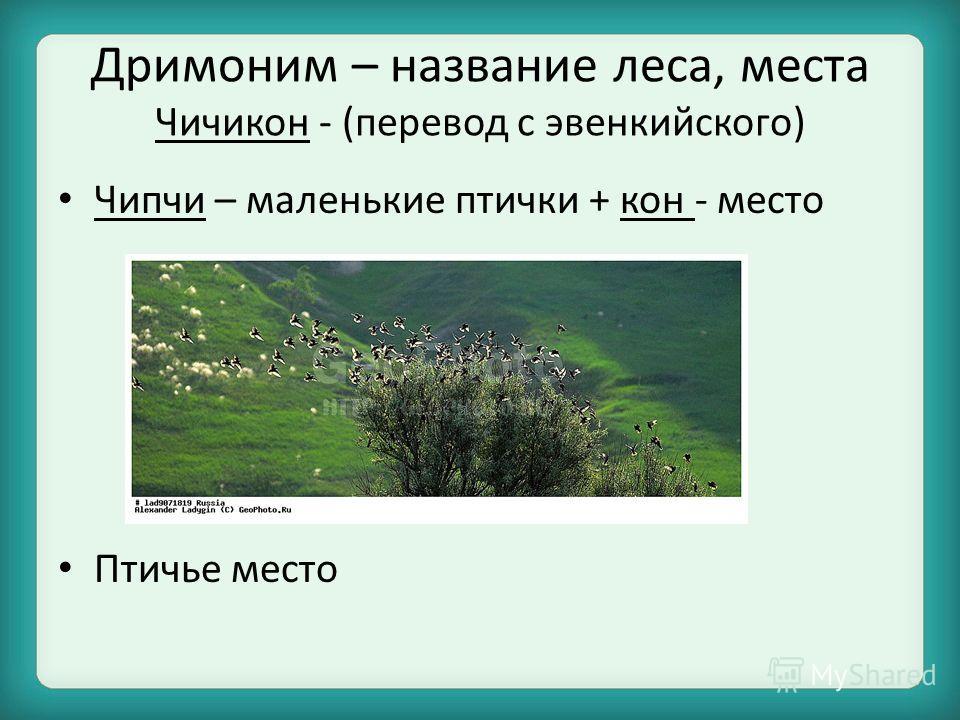Дримоним – название леса, места Чичикон - (перевод с эвенкийского) Чипчи – маленькие птички + кон - место Птичье место