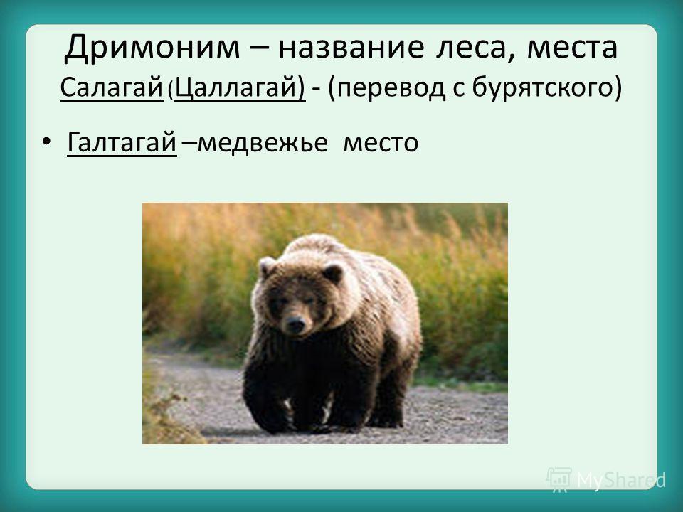 Дримоним – название леса, места Салагай ( Цаллагай) - (перевод с бурятского) Галтагай –медвежье место