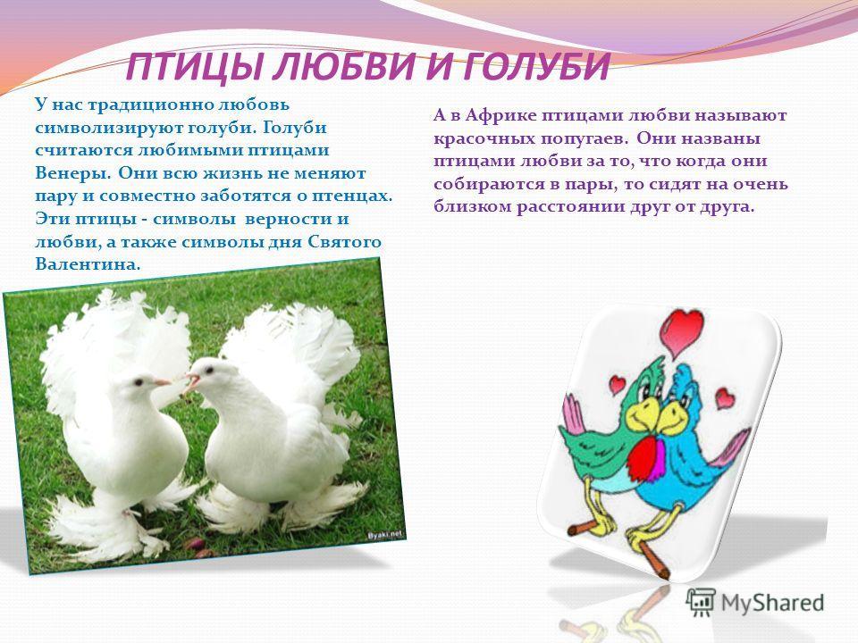 ПТИЦЫ ЛЮБВИ И ГОЛУБИ У нас традиционно любовь символизируют голуби. Голуби считаются любимыми птицами Венеры. Они всю жизнь не меняют пару и совместно заботятся о птенцах. Эти птицы - символы верности и любви, а также символы дня Святого Валентина. А