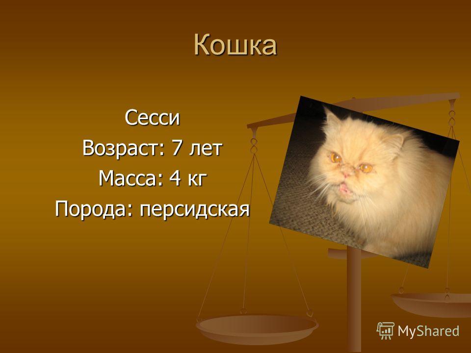 Кошка Сесси Возраст: 7 лет Масса: 4 кг Порода: персидская