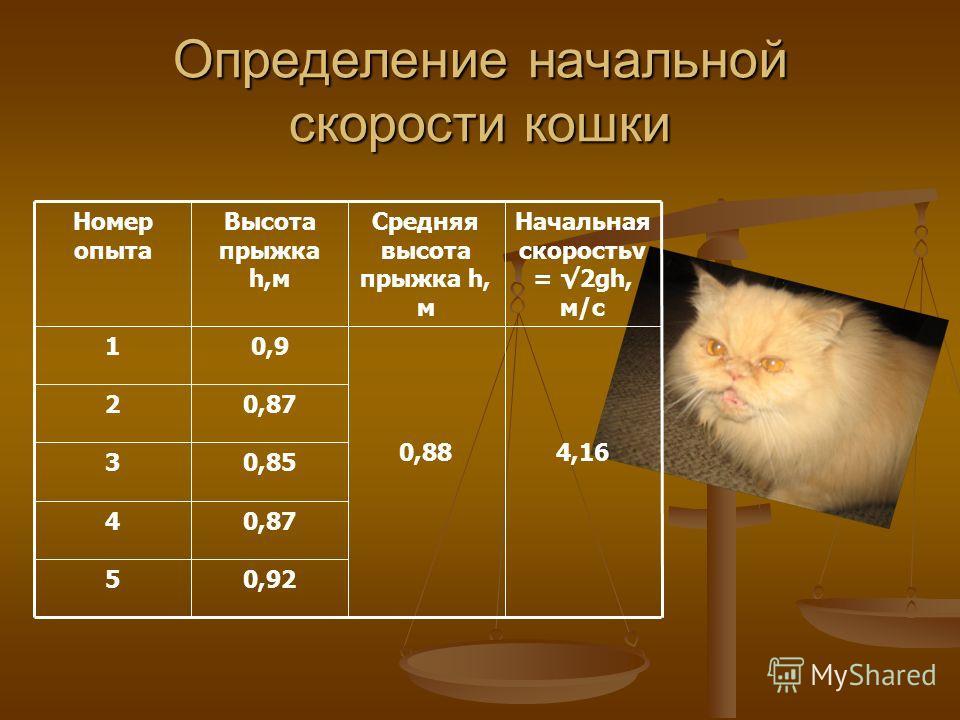 Определение начальной скорости кошки 0,925 0,874 0,853 0,872 4,160,88 0,91 Начальная скоростьv = 2gh, м/с Средняя высота прыжка h, м Высота прыжка h,м Номер опыта
