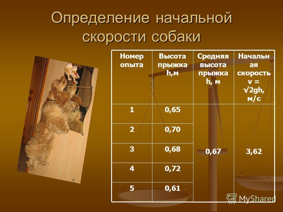 Определение начальной скорости собаки 0,615 0,724 0,683 0,702 3,620,67 0,651 Начальн ая скорость v = 2gh, м/с Средняя высота прыжка h, м Высота прыжка h,м Номер опыта