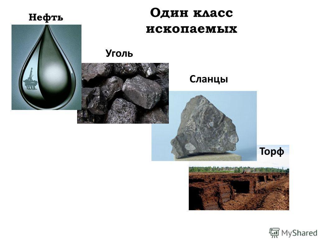 Один класс ископаемых Уголь Торф Сланцы Нефть