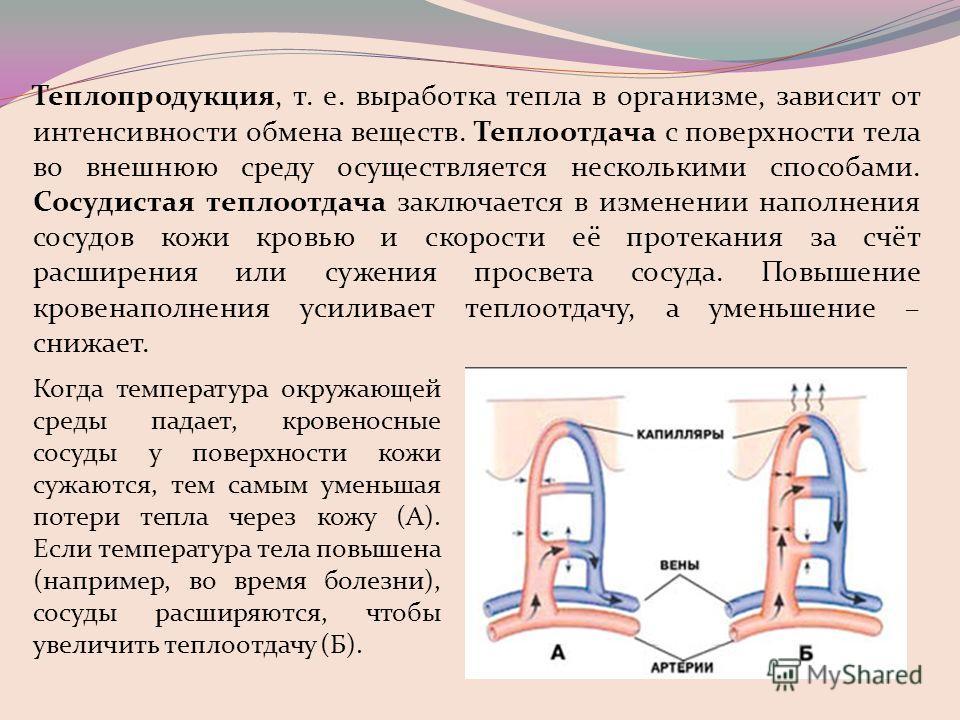Теплопродукция, т. е. выработка тепла в организме, зависит от интенсивности обмена веществ. Теплоотдача с поверхности тела во внешнюю среду осуществляется несколькими способами. Сосудистая теплоотдача заключается в изменении наполнения сосудов кожи к