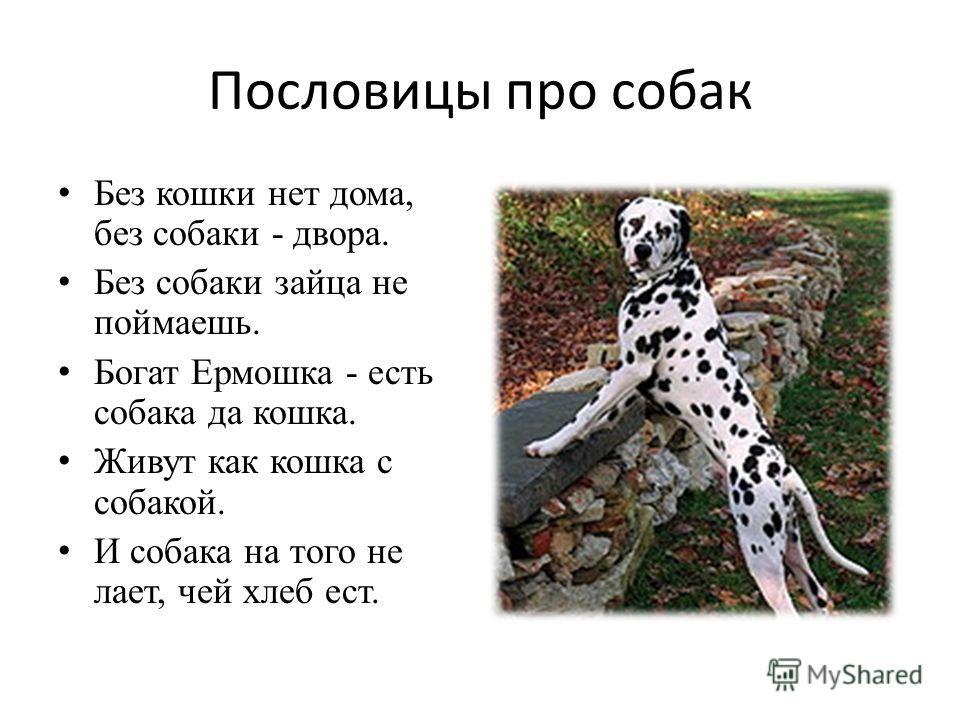 Пословицы про собак Без кошки нет дома, без собаки - двора. Без собаки зайца не поймаешь. Богат Ермошка - есть собака да кошка. Живут как кошка с собакой. И собака на того не лает, чей хлеб ест.