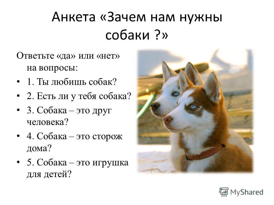 Анкета «Зачем нам нужны собаки ?» Ответьте «да» или «нет» на вопросы: 1. Ты любишь собак? 2. Есть ли у тебя собака? 3. Собака – это друг человека? 4. Собака – это сторож дома? 5. Собака – это игрушка для детей?