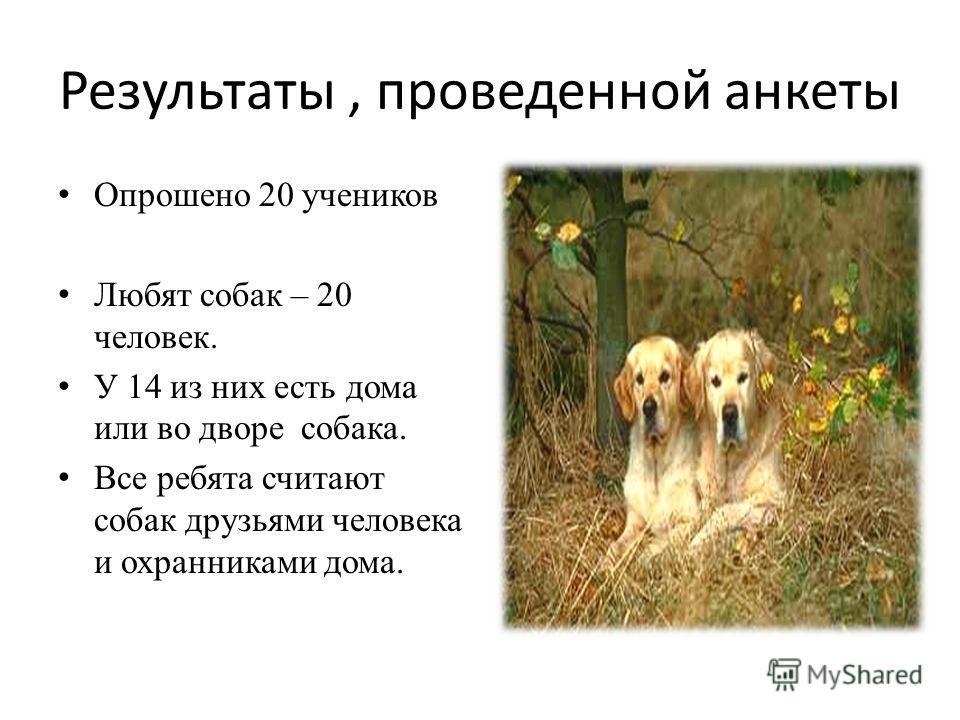 Результаты, проведенной анкеты Опрошено 20 учеников Любят собак – 20 человек. У 14 из них есть дома или во дворе собака. Все ребята считают собак друзьями человека и охранниками дома.
