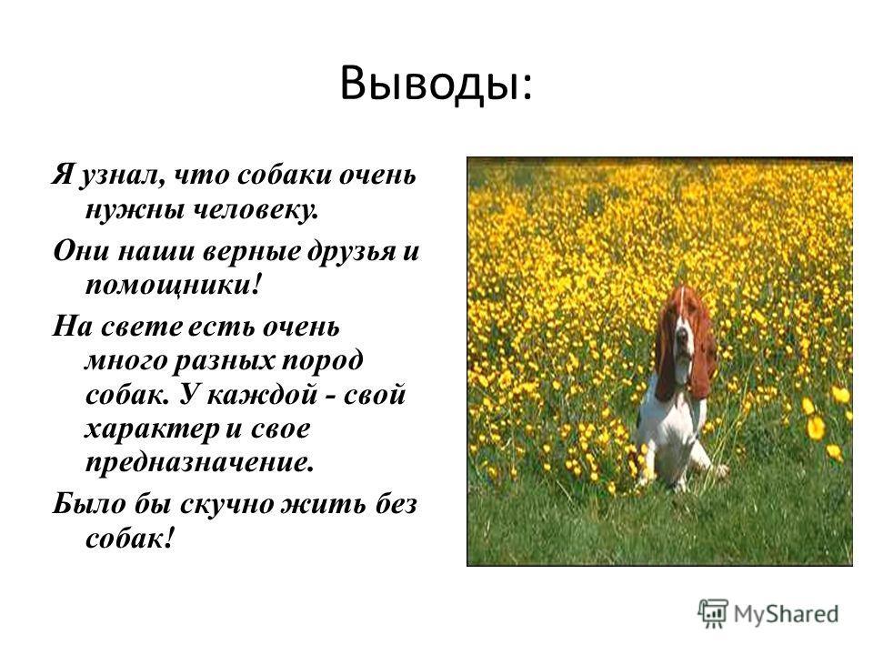 Выводы: Я узнал, что собаки очень нужны человеку. Они наши верные друзья и помощники! На свете есть очень много разных пород собак. У каждой - свой характер и свое предназначение. Было бы скучно жить без собак!
