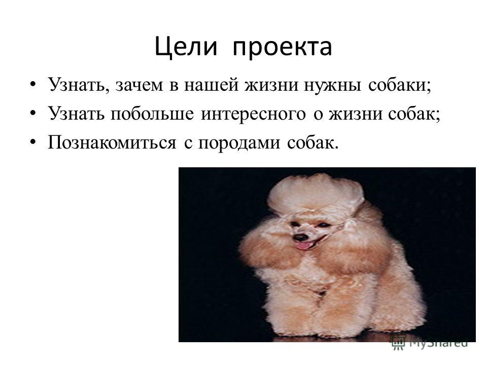 Цели проекта Узнать, зачем в нашей жизни нужны собаки; Узнать побольше интересного о жизни собак; Познакомиться с породами собак.