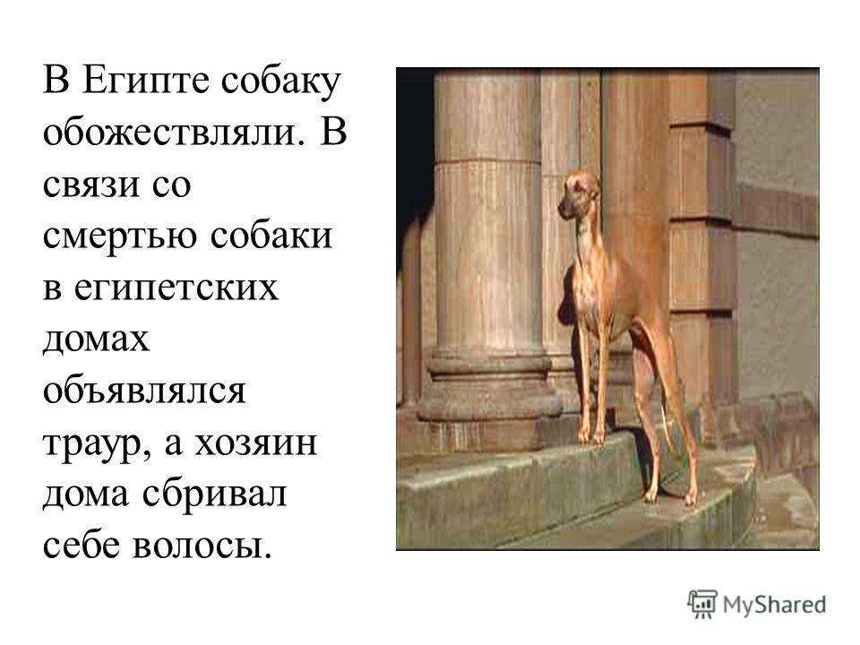 В Египте собаку обожествляли. В связи со смертью собаки в египетских домах объявлялся траур, а хозяин дома сбривал себе волосы.