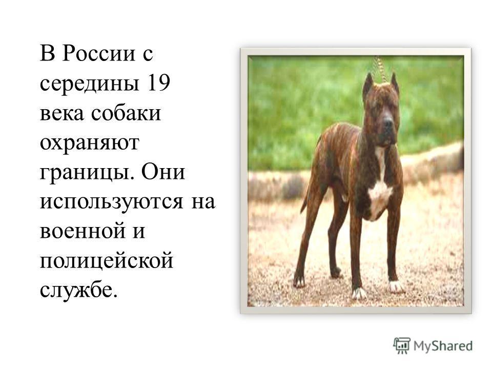 В России с середины 19 века собаки охраняют границы. Они используются на военной и полицейской службе.