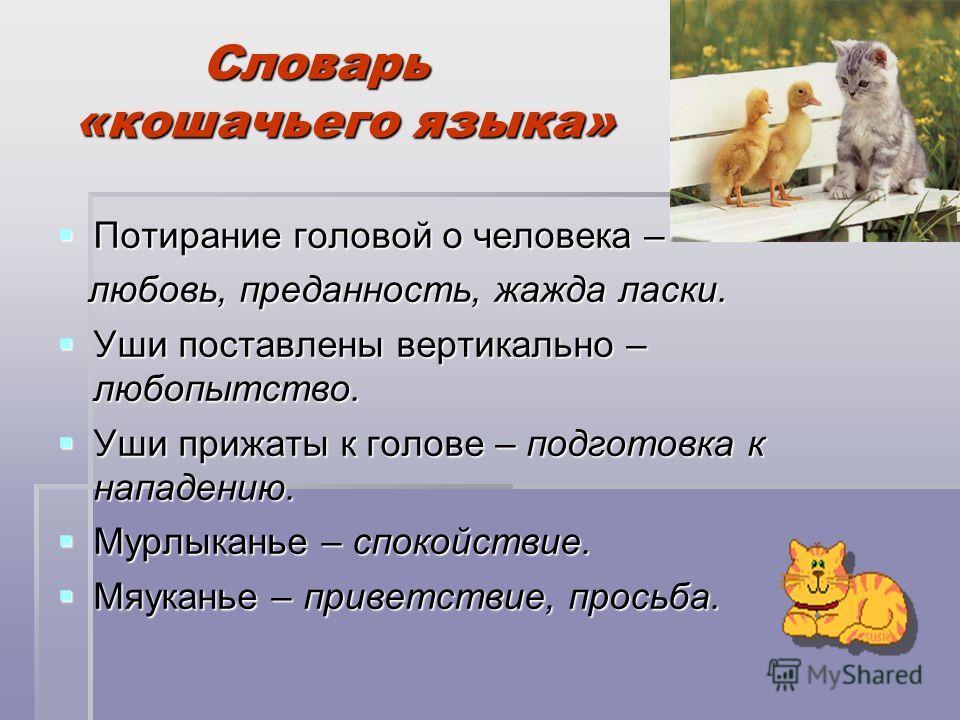 Словарь «кошачьего языка» Словарь «кошачьего языка» Потирание головой о человека – Потирание головой о человека – любовь, преданность, жажда ласки. любовь, преданность, жажда ласки. Уши поставлены вертикально – любопытство. Уши поставлены вертикально