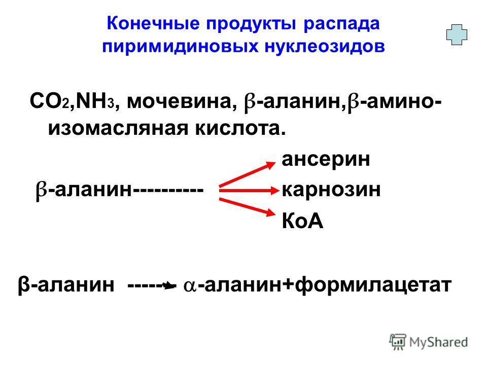 Конечные продукты распада пиримидиновых нуклеозидов CO 2,NH 3, мочевина, β -аланин, β -амино- изомасляная кислота. ансерин β -аланин---------- карнозин КоА β-аланин ------- -аланин+формилацетат