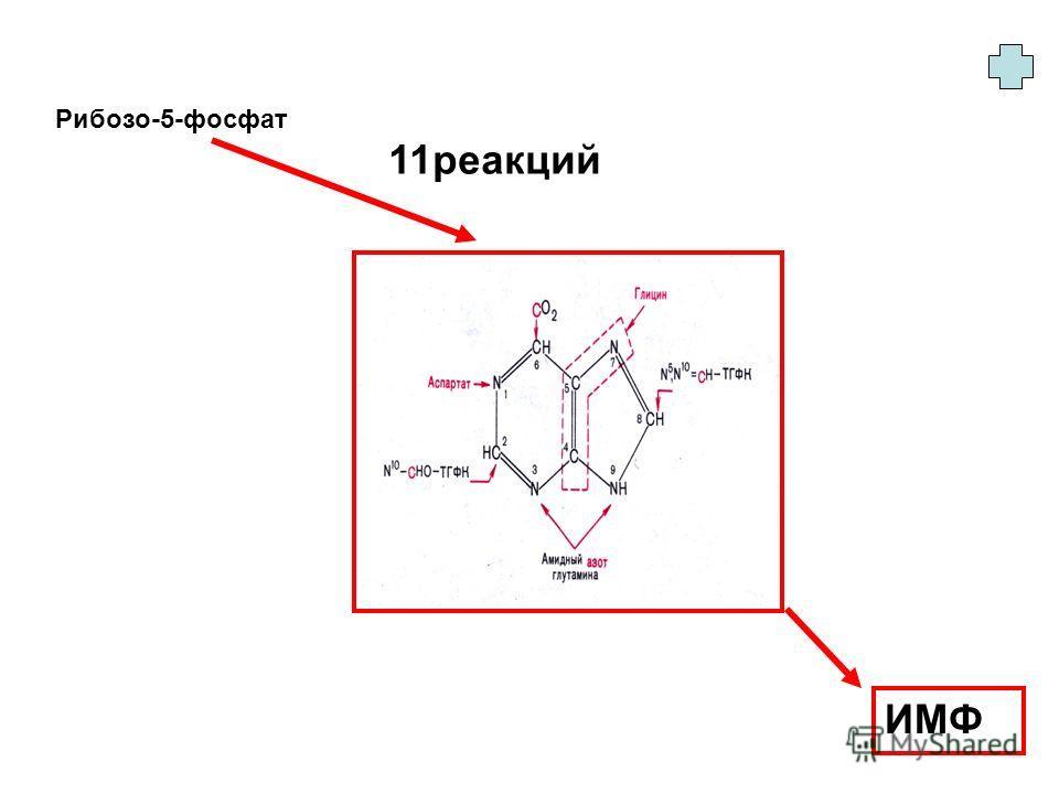 Рибозо-5-фосфат ИМФ 11 реакций