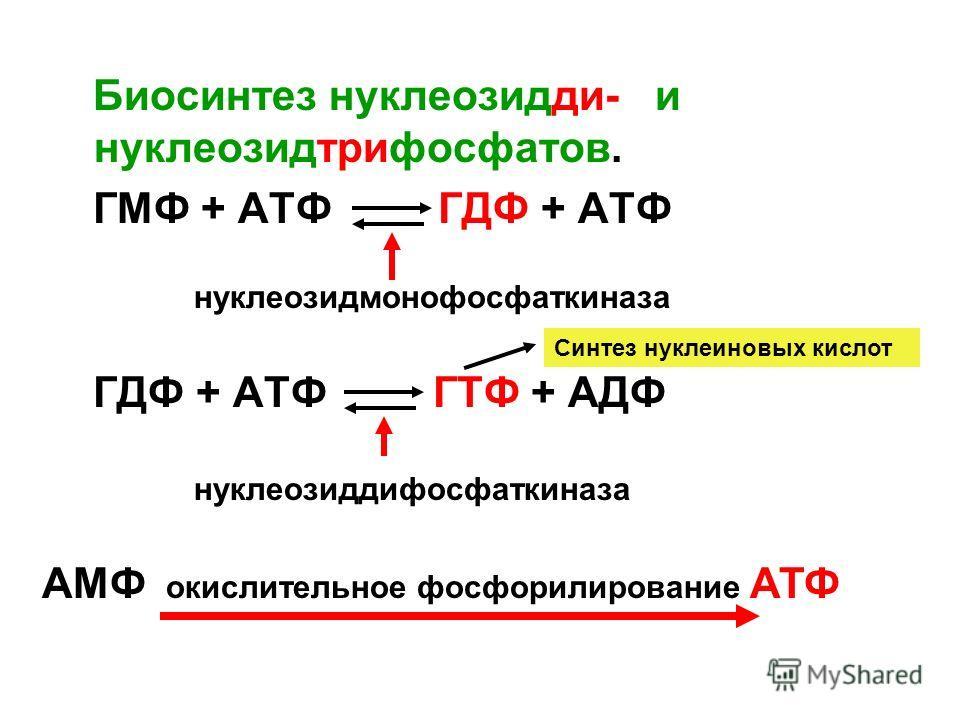 Биосинтез нуклеозидди- и нуклеозидтрифосфатов. ГМФ + АТФ ГДФ + АТФ ГДФ + АТФ ГТФ + АДФ нуклеозидмонофосфаткиназа нуклеозиддифосфаткиназа Синтез нуклеиновых кислот АМФ окислительное фосфорилирование АТФ
