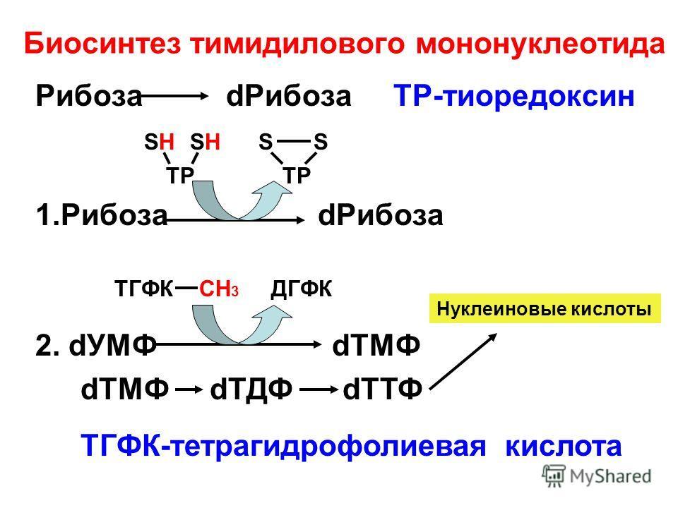 Биосинтез тимидилового мононуклеотида Рибоза d Рибоза ТР-тиоредоксин SH SH S S ТР ТР 1. Рибоза d Рибоза 2. dУМФ dТМФ ТГФК СН 3 ДГФК dТМФ dТДФ dТТФ ТГФК-тетрагидрофолиевая кислота Нуклеиновые кислоты