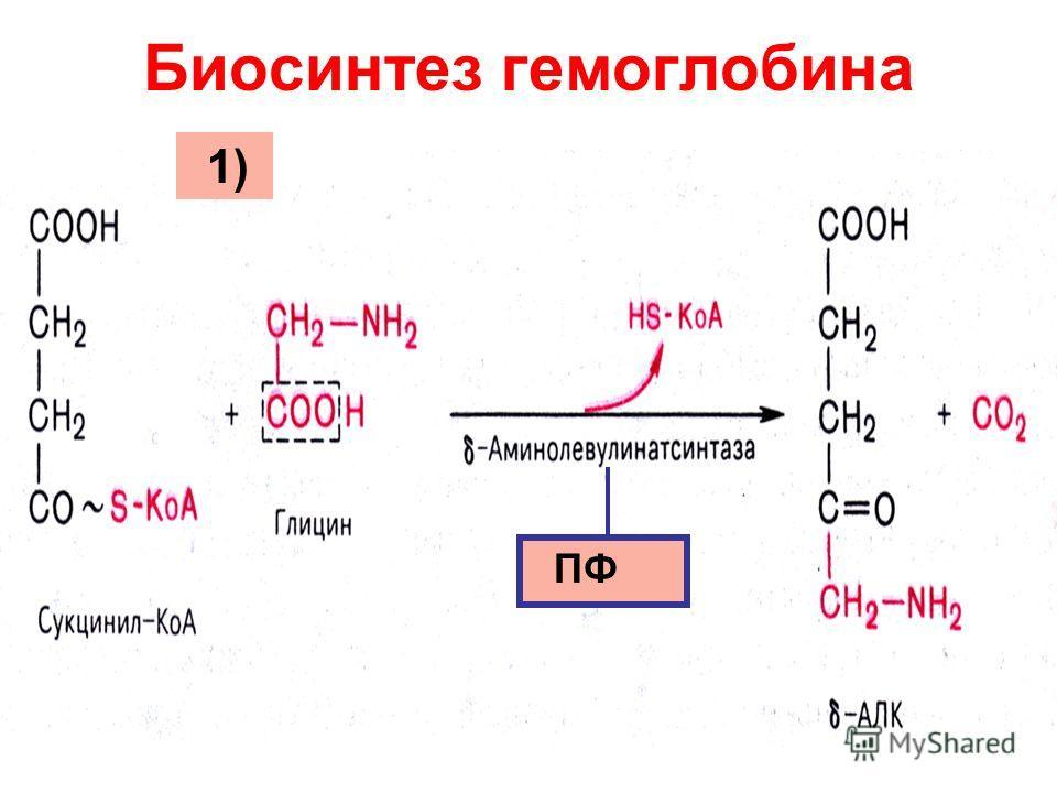 Биосинтез гемоглобина ПФ 1)