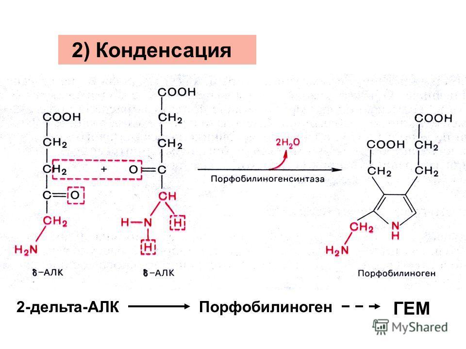 2) Конденсация 2-дельта-АЛКПорфобилиноген ГЕМ