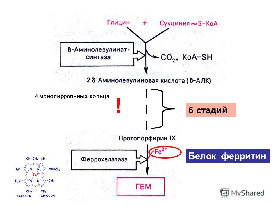 6 стадий Белок ферритин ! 4 монопиррольных кольца
