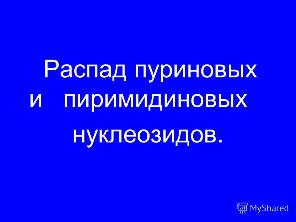 Распад пуриновых и пиримидиновых нуклеозидов.