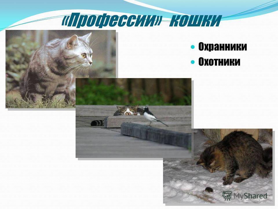 «Профессии» кошки Охранники Охотники