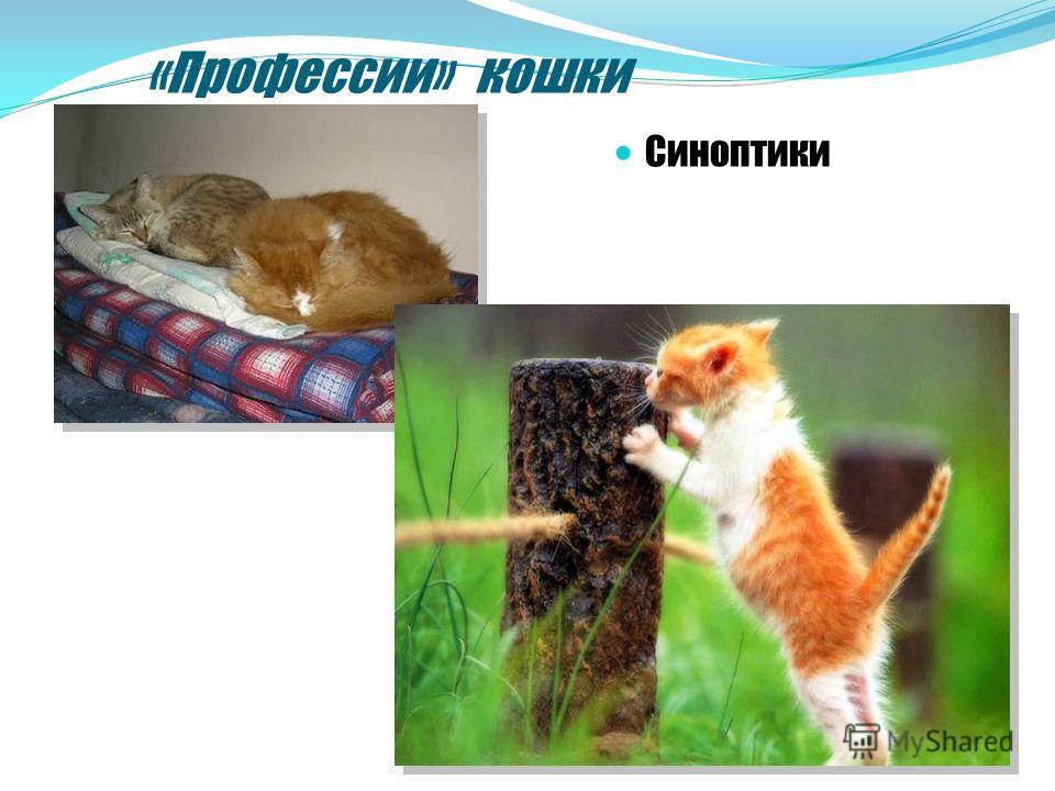 «Профессии» кошки Синоптики