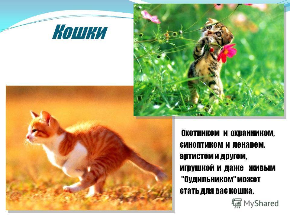 Кошки Охотником и охранником, синоптиком и лекарем, артистом и другом, игрушкой и даже живым ''будильником'' может стать для вас кошка.