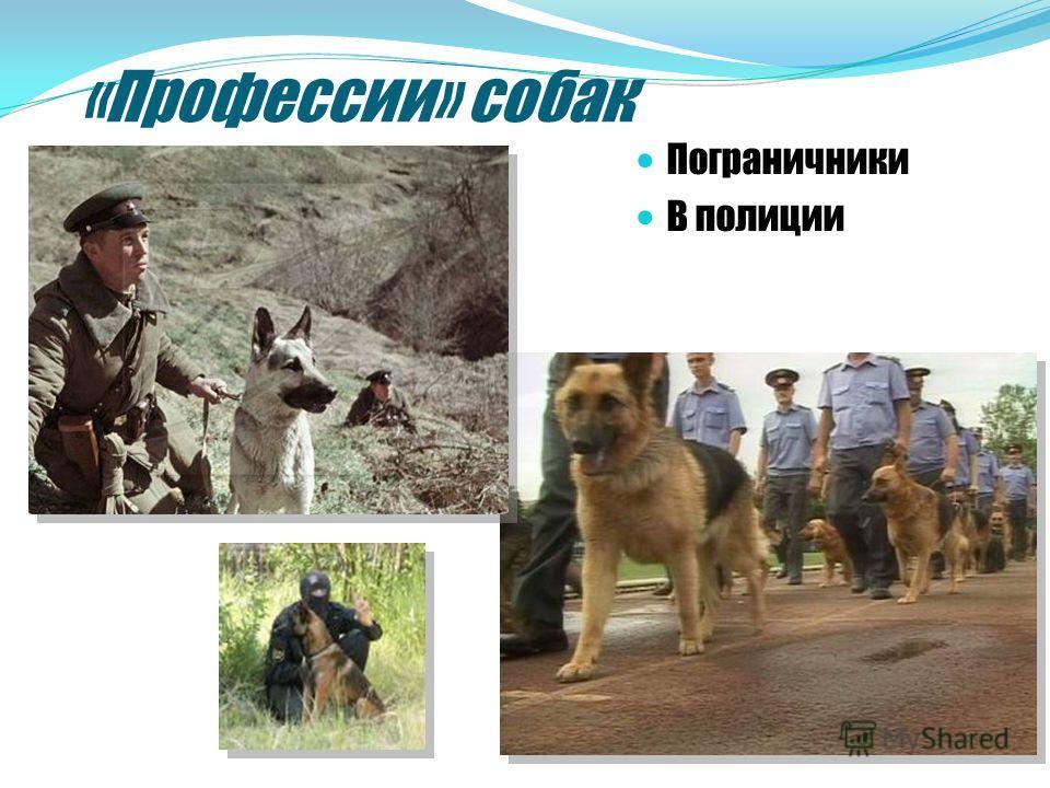 «Профессии» собак Пограничники В полиции